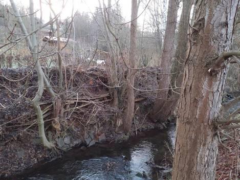 Sehr große Einschichtungen von Ästen und Strauchwerk in den Baumbestand am Ufer der Elte in Lauchröden
