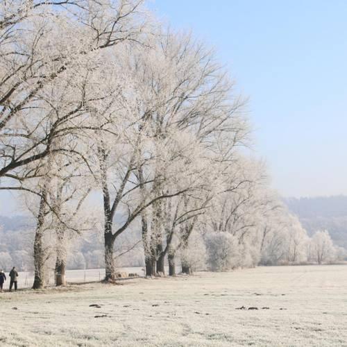 Winterstimmung am Pferderasen