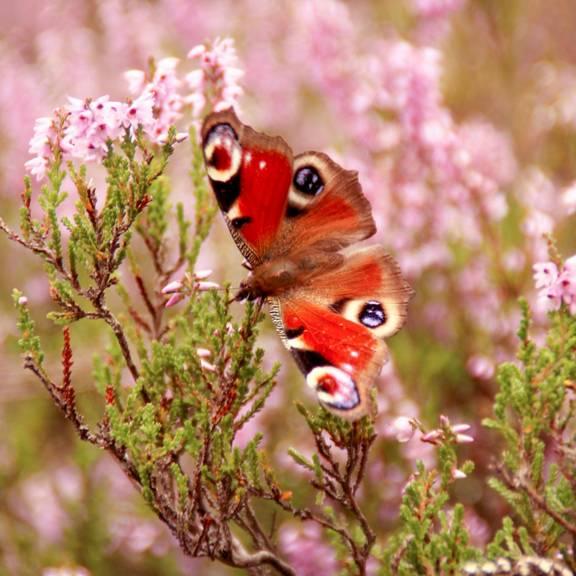 Zahlreiche Insektenarten finden Lebensraum in der Gerstunger Wacholderheide ©KHartung